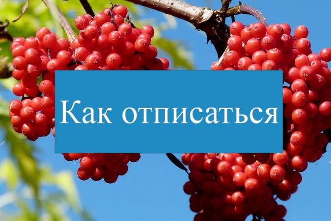 Синий блок с текстом на фоне фото ягод рябины